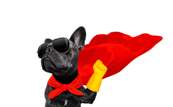 super hero dog