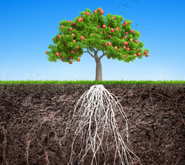 an apple tree and soil with roots and grass 3D illustration