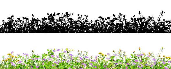 clover flowers and grass isolated on black background with alpha mask