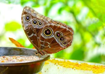 Garden Poster Butterfly Closeup beautiful butterfly