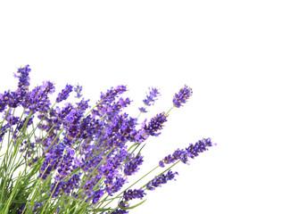 Photo sur Plexiglas Lavande bunch of lavender on white background