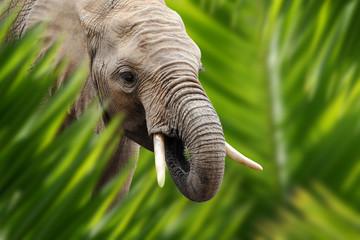 Wall Mural - Elephant portrait in jungle