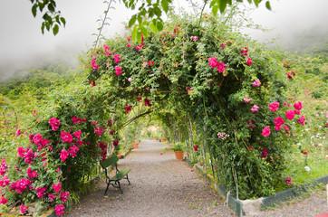 Diesen romantische Rosenbogen fand ich auf Madeira in einem kleinen Rosarium. Dicht zugewachsen in voller Blütenpracht verleiht der aufziehende Nebel diesem Bild eine besonders romantische Stimmung.