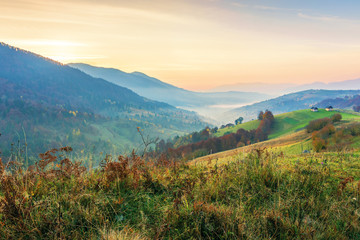 countryside in mountains at dawn. grassy rural slopes with fields and trees in autumn. ridge rolling in to horizon. village down in the valley full of fog. high clouds glowing in reddish light
