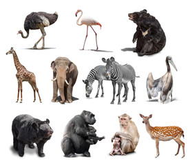 big set of wild animals isolated on white background