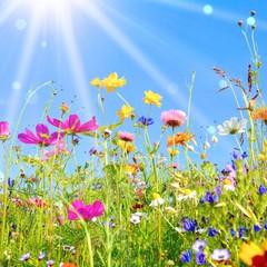 bunte Blumenwiese - Grußkarte Wildblumen Wiese