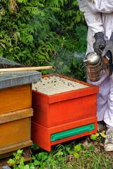Bienenstöcke eines Imkers bei der Pflege der Bienen mit Waben und Honigbienen
