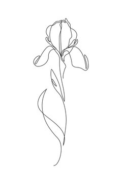 Iris flower in one line art drawing style. Black line sketch on white background. Vector illustration