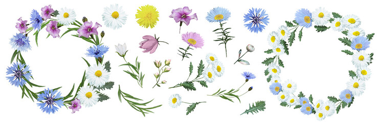 Botanical collection of wildflowers: blue cornflowers, pink flowers, white daisies, dandelions, leaves, twigs, buds. Flower frame,wreath. Watercolor. Wall mural