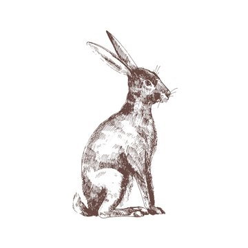 Cute bunny, rabbit or hare isolated hand drawn with contour lines on white background