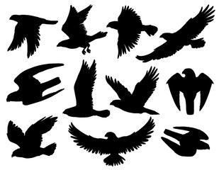 Eagle bird black silhouettes of falcon and hawk