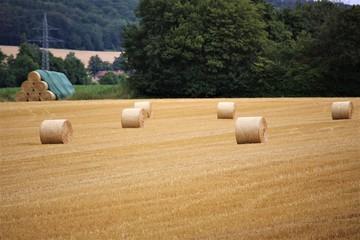 bales of hay in field