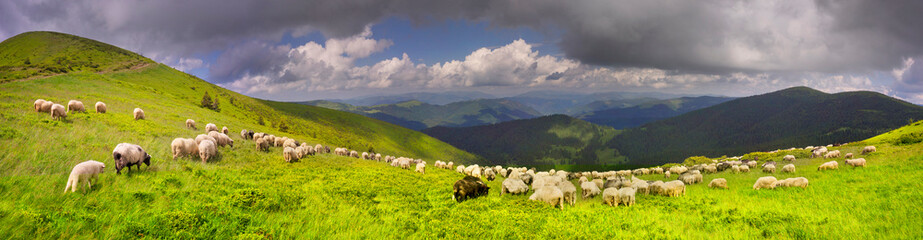 Photo sur Plexiglas Vieux rose A flock of sheep on a mountain
