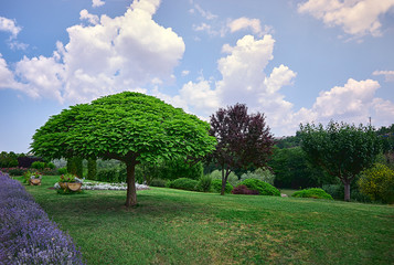 beautiful landscape. green trees in a large park