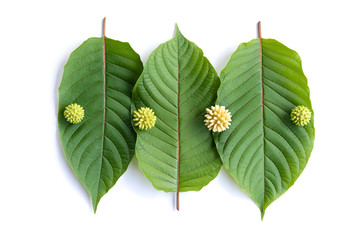 Leaves, flowers, fruits and liquid of Kratom or mitragynine on white background isolated Wall mural