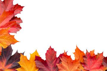 Border of autumn maple leaves isolated on white background