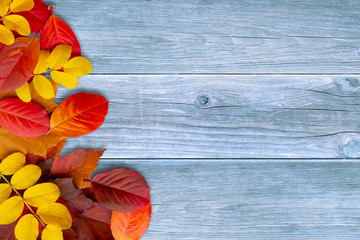 Border of coloful autumn leaves on blue wooden background - a beautiful template for an autumn card or congratulations