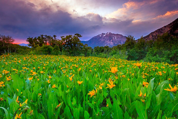 Summer green in the Wasatch Mountains, Utah, USA. Wall mural