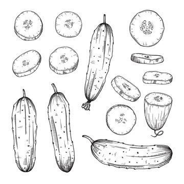 Set of different cucumbers isolated on white background. Vector
