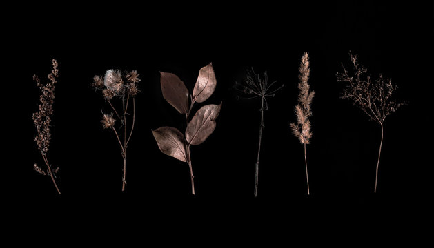 Set of wild dry pressed flowers and leaves, isolated on black. Creative photo. Set of dry herbs stems isolated on black