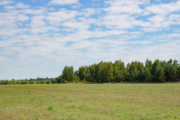 Large beautiful summer the field with a distant kind on a forest