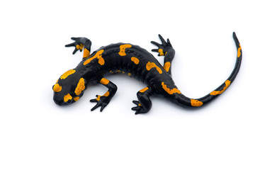 The fire salamander isolated on white background Wall mural