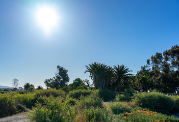 Nice sunlight and blue sky landscape with at Palo Alto, California , USA