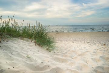 Fototapeta Plaża trawa i Morze Bałtyckie
