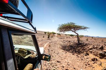 Off road car going through savanna in moroccan hamada desert Erg Chigaga near Foum Zguid with acacia trees