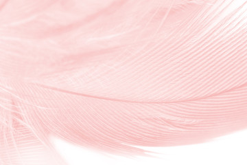 Beautiful soft pink color trends feather pattern texture background