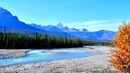 Wall Mural - Athabasca River in Autumn,Jasper National Park, Alberta Canada