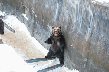 Bear in zoo, Hokkaido, Japan