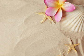 seashells, tropical flowers and sand, summer background