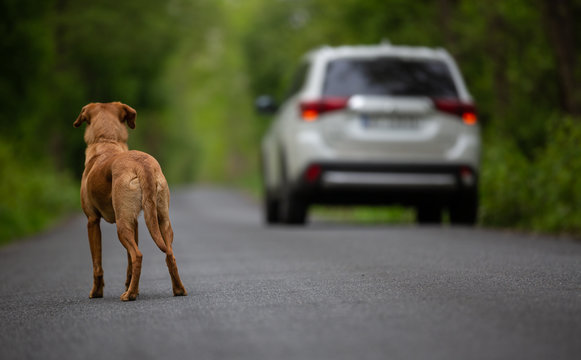 An abandoned dog on the street looking at a car going away