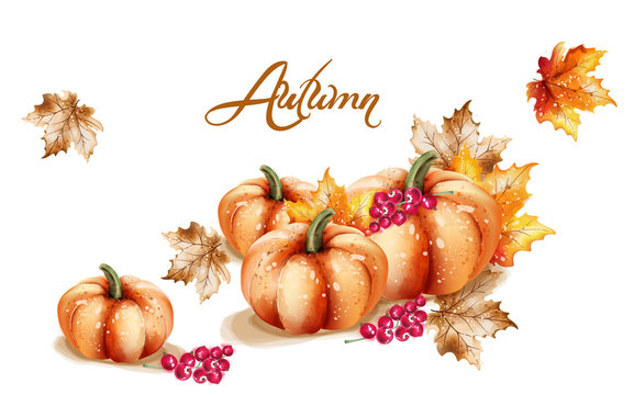 Autumn fall vegetables Vector watercolor. pumpkin, sunflower and mushrooms illustrations