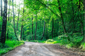 Road in the forest. Beautiful summer wallpaper.