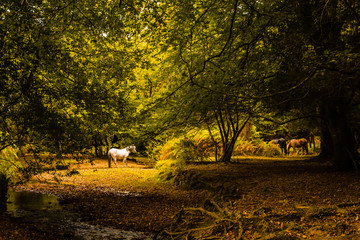 Horses in a Forest Clearing