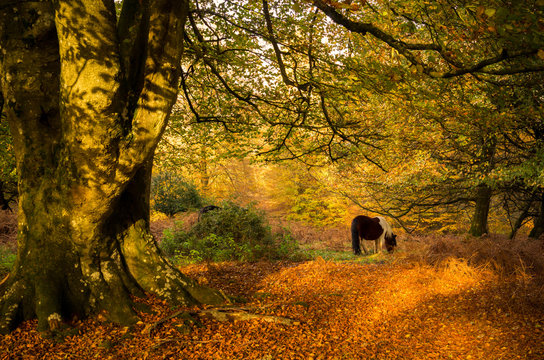 Horse grazing under a tree