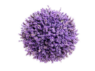 Photo sur Aluminium Lavande Little planet lavender