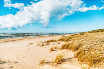 Beautiful seascape, spikelets on the background of a sandy beach sky with clouds and cold sea, Baltic Sea