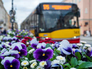 Cityscape with flowers in Warsaw, Poland.