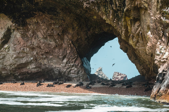 Pulled back view of sea lions on beach in sea cave, Paracas, Peru