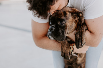 Adorable thoughtful boxer dog in hands of caring bonding owner