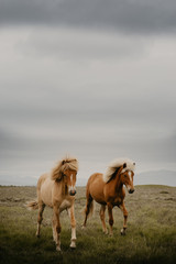 Two horse running in field