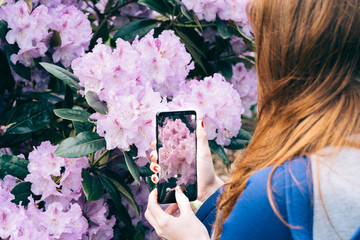 Crop redhead woman using phone and taking photo of bright blooming flowers in garden, Scotland