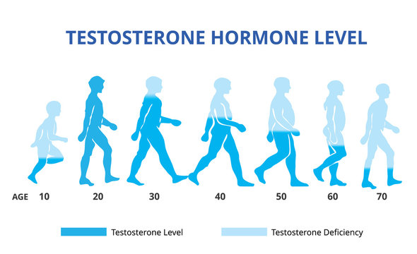 science, male, age, loss, human, level, medicine, balance, decline, strength, low, sexual, biological, hormone, health, testosterone, scientific, element, man, steroid, diagram, sex, illustration, bod