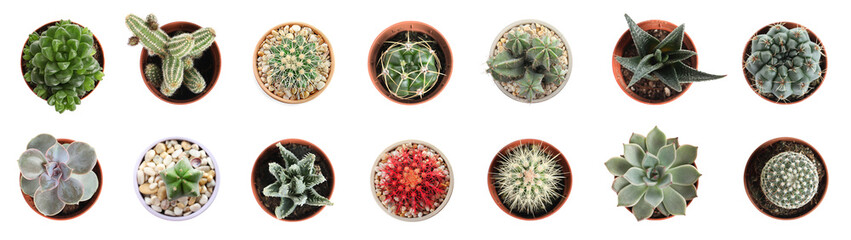 Foto op Aluminium Cactus Beautiful cactus on white background