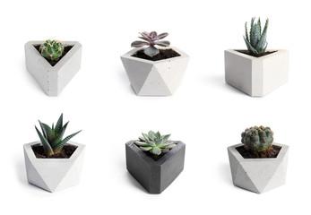 Foto op Plexiglas Cactus Beautiful cactus on white background
