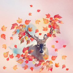 Deer male portrait with autumn concept