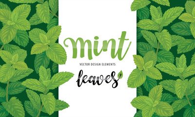 Green mint leaves on background template. Vector set of herbal element for advertising, packaging design, greeting card and fashion design.